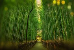 Beneficios del Bambú